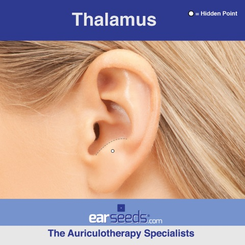 thalamus ear point